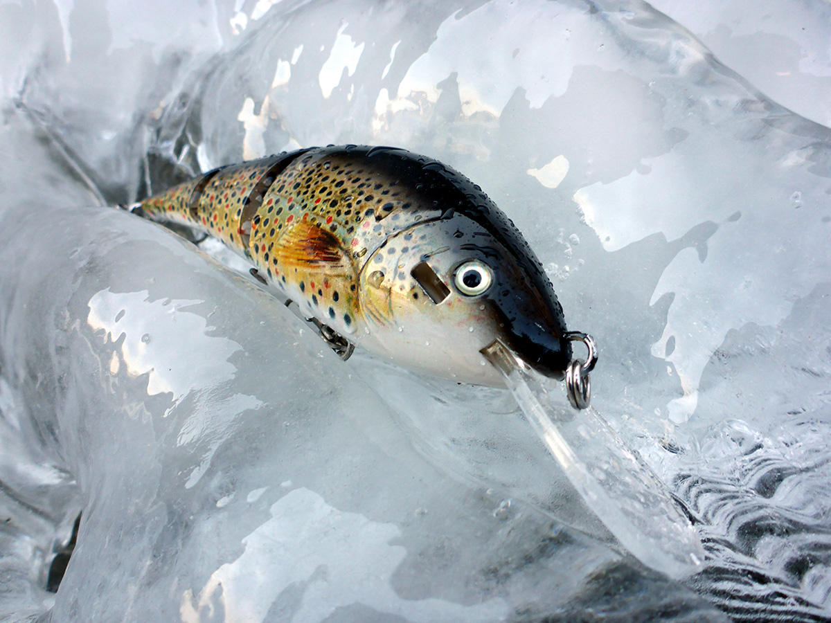 brown-trout-with-lip-bib