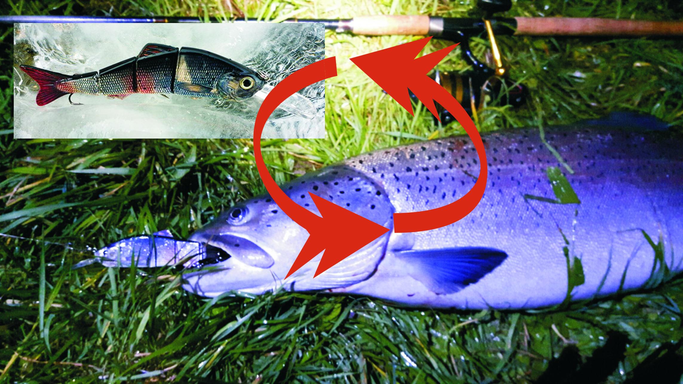 Hucho fishing garancija